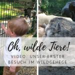 Video: Arthurs erster Besuch im Tierpark